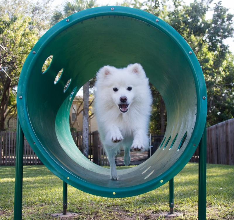 HOW TO: Create a Dog Park
