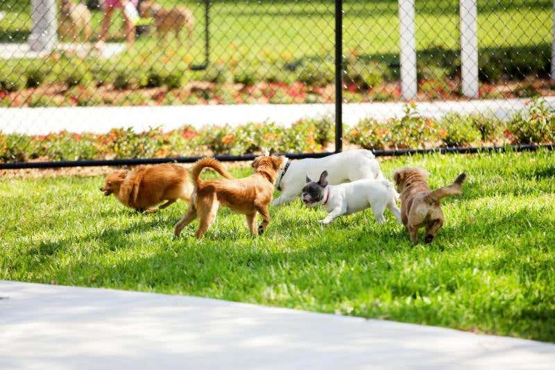 Plan Your Dog Park This Spring