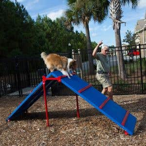 Dog Park Products - King of the Hill